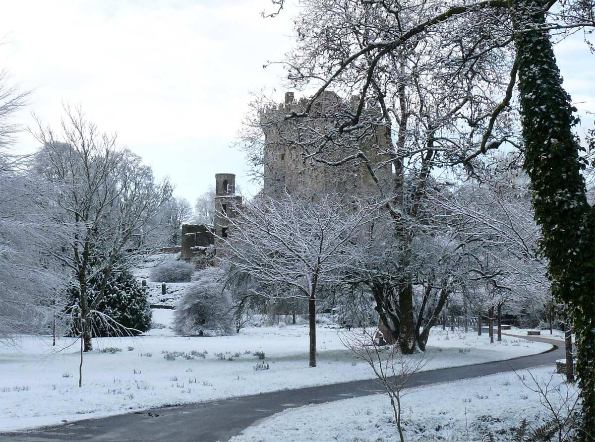 Blarney Castle, Conservation Project